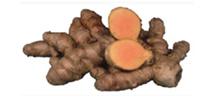 生秋ウッチン根茎